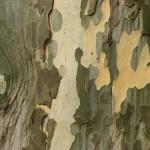 Baumbilder