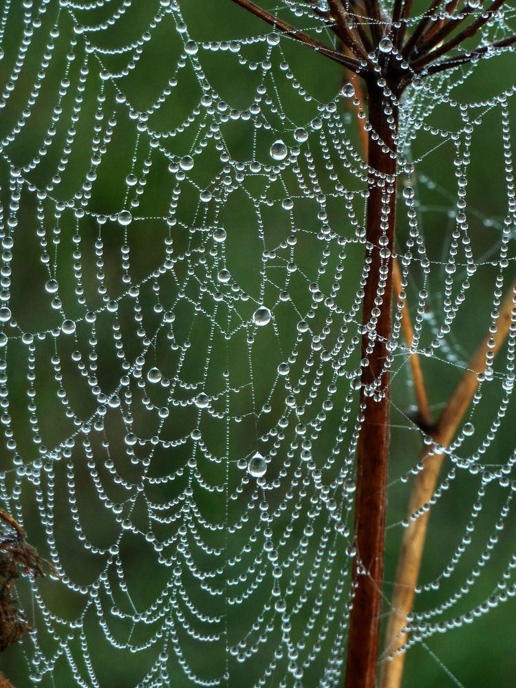 Spinnweben 15