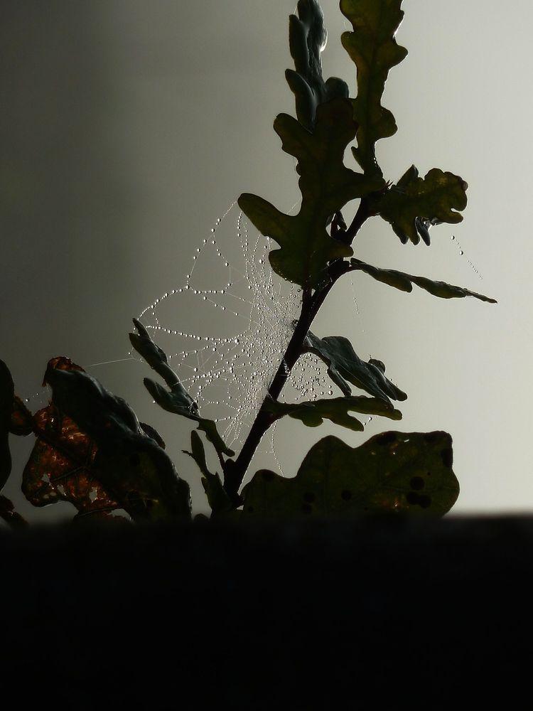 Spinnweben 13