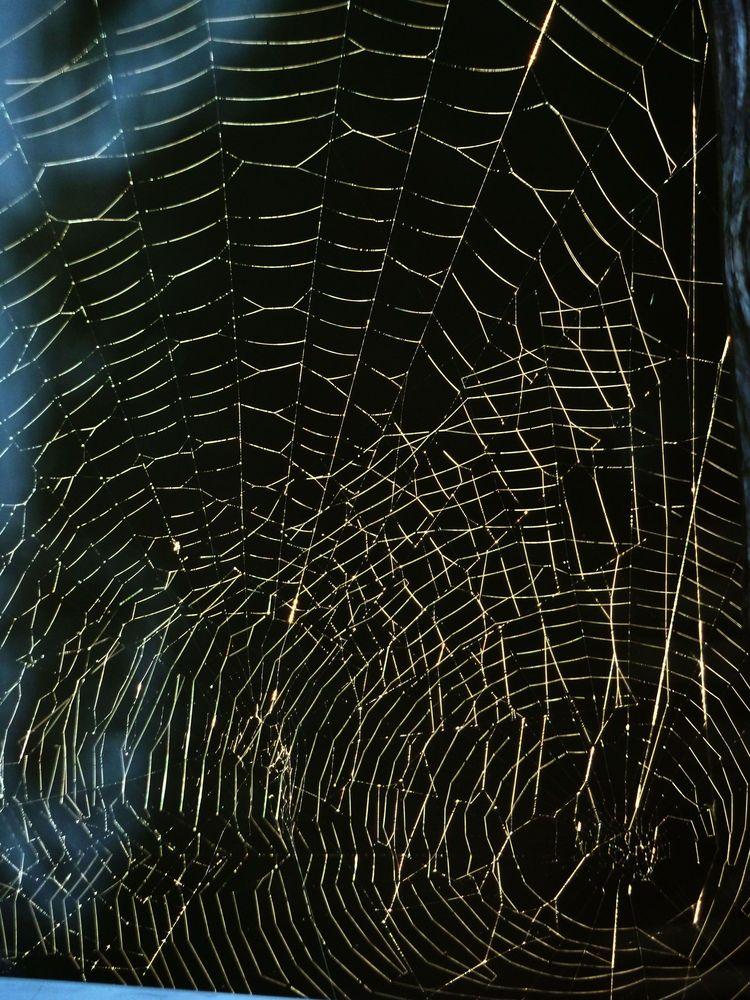 Spinnweben 19