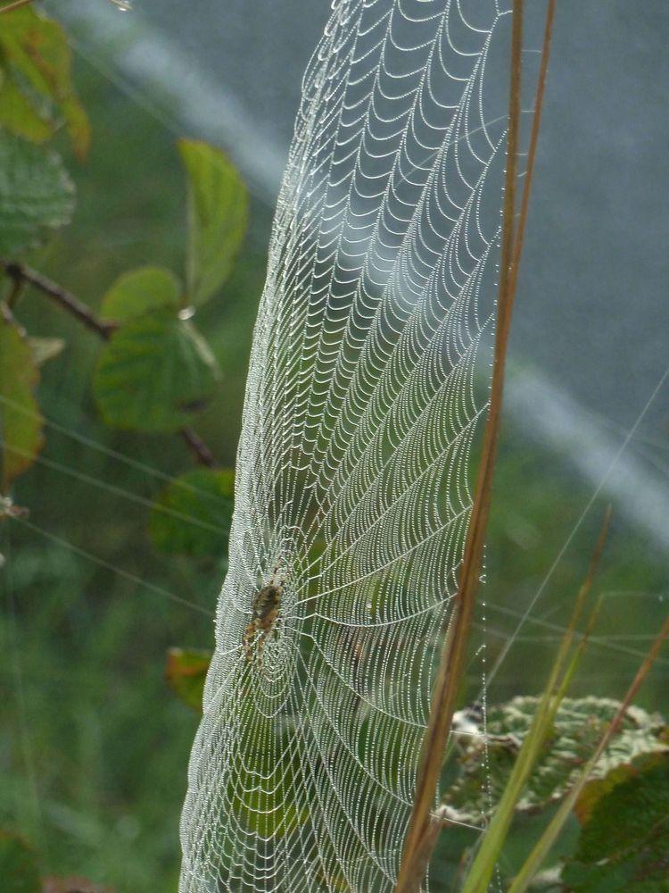 Spinnweben 8