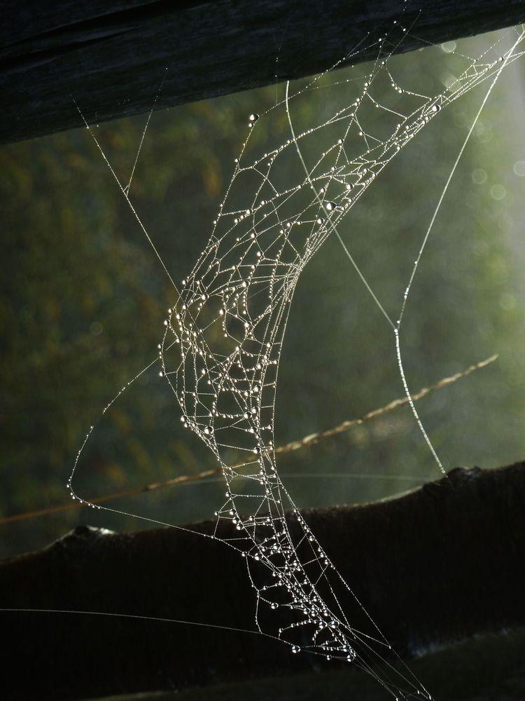 Spinnweben 14