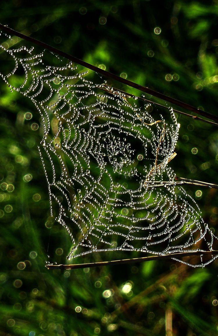 Spinnweben 26