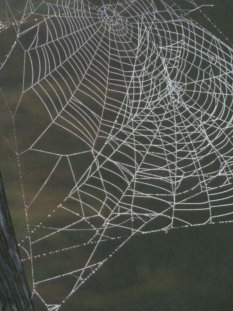Spinnweben 17
