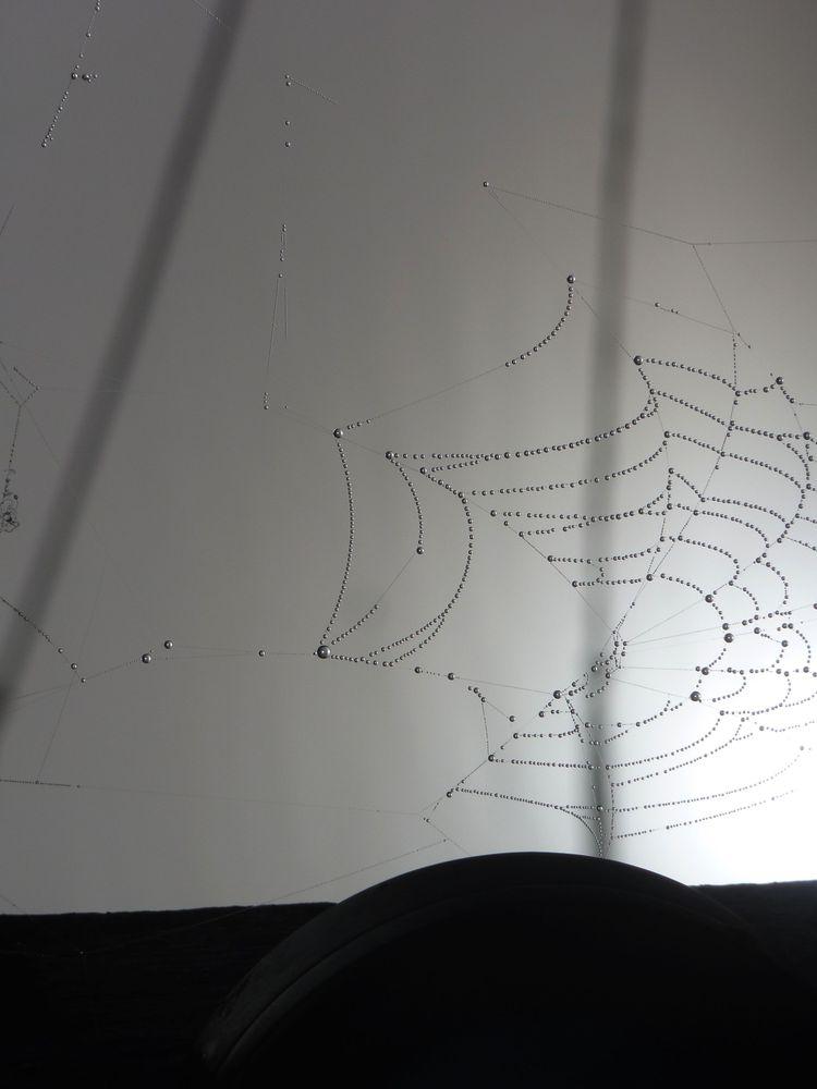 Spinnweben 10