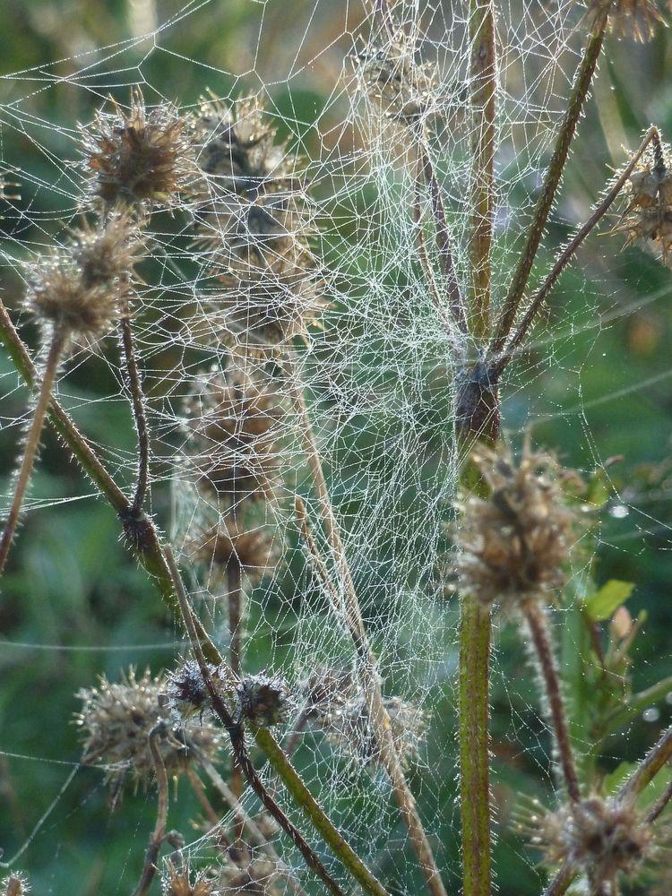 Spinnweben 24
