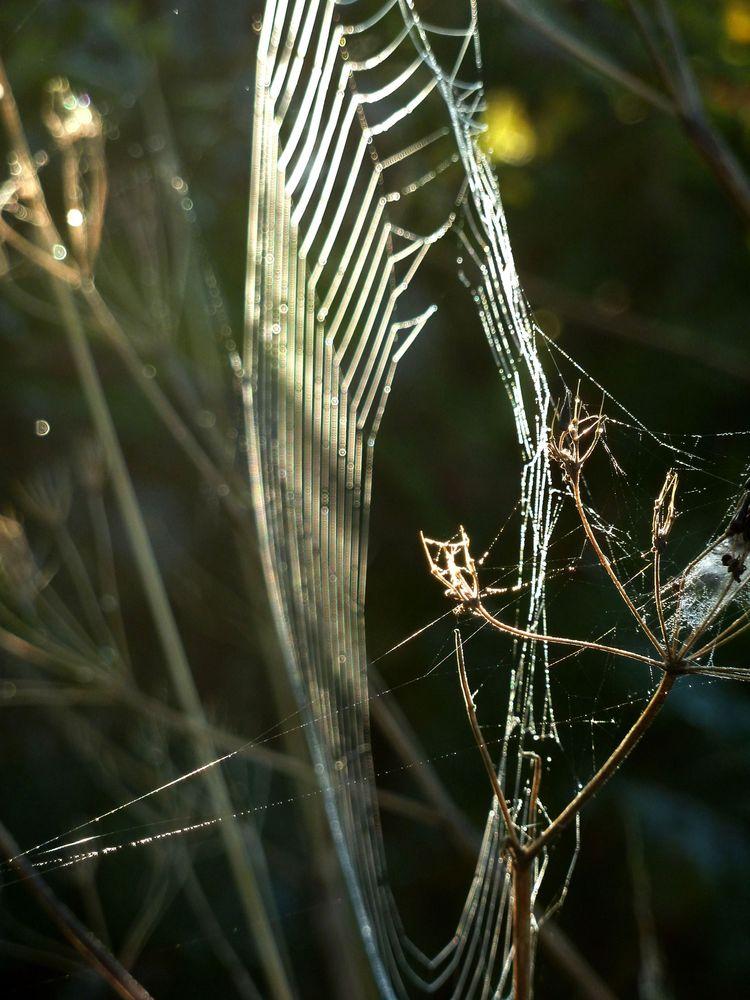 Spinnweben 6