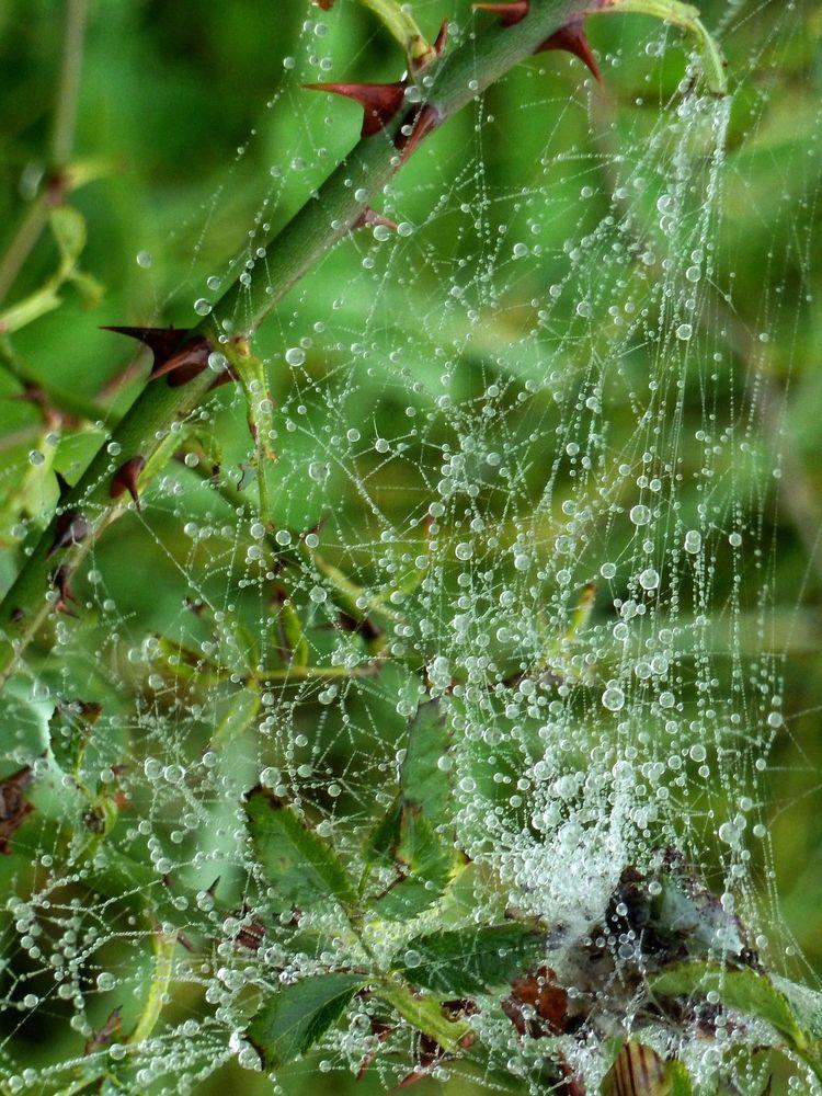 Spinnweben 16