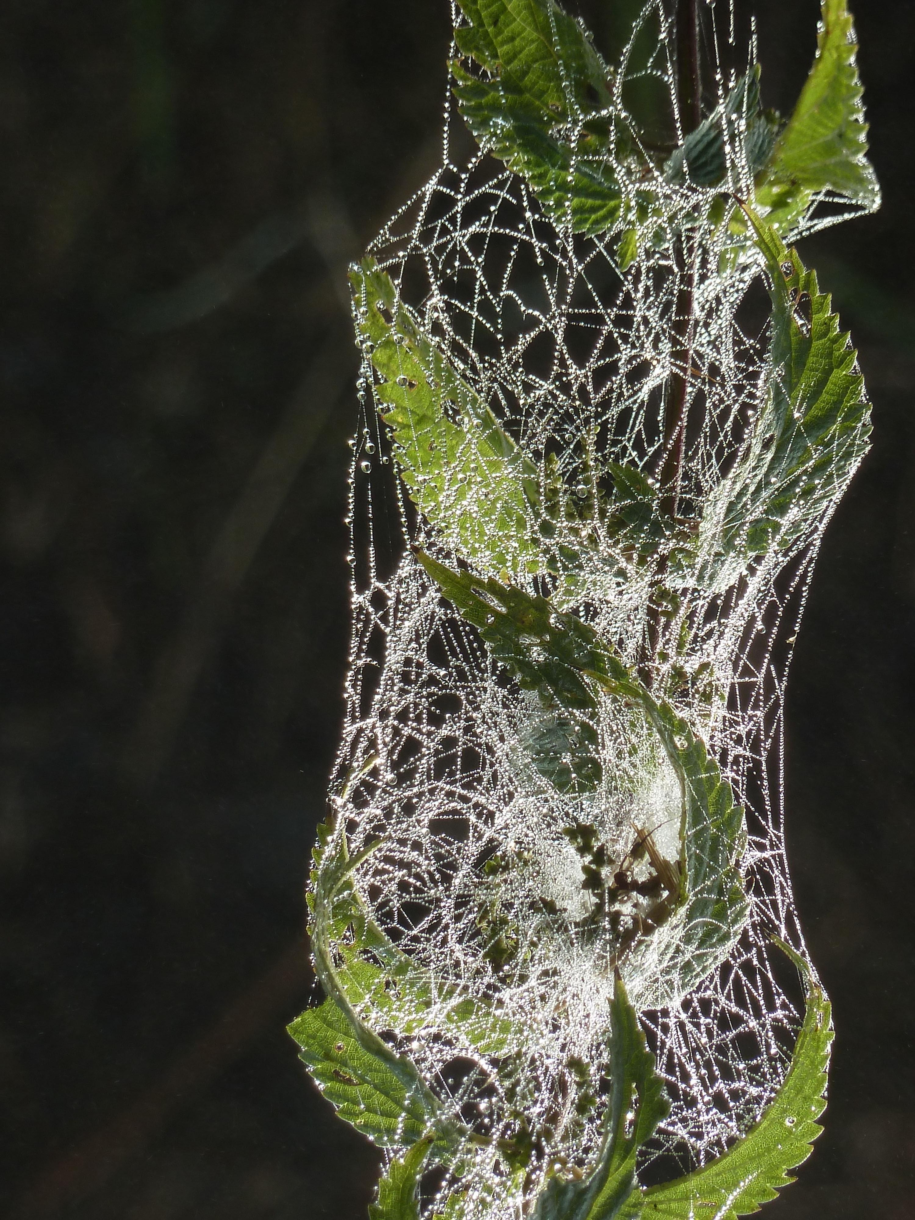 Spinnweben 25