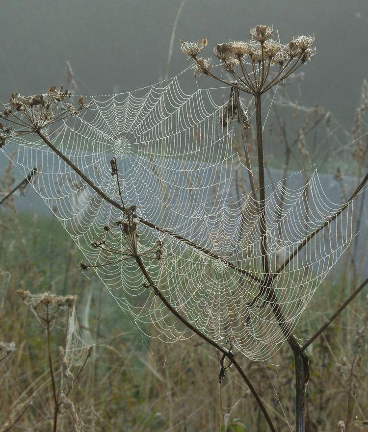 Spinnweben 22