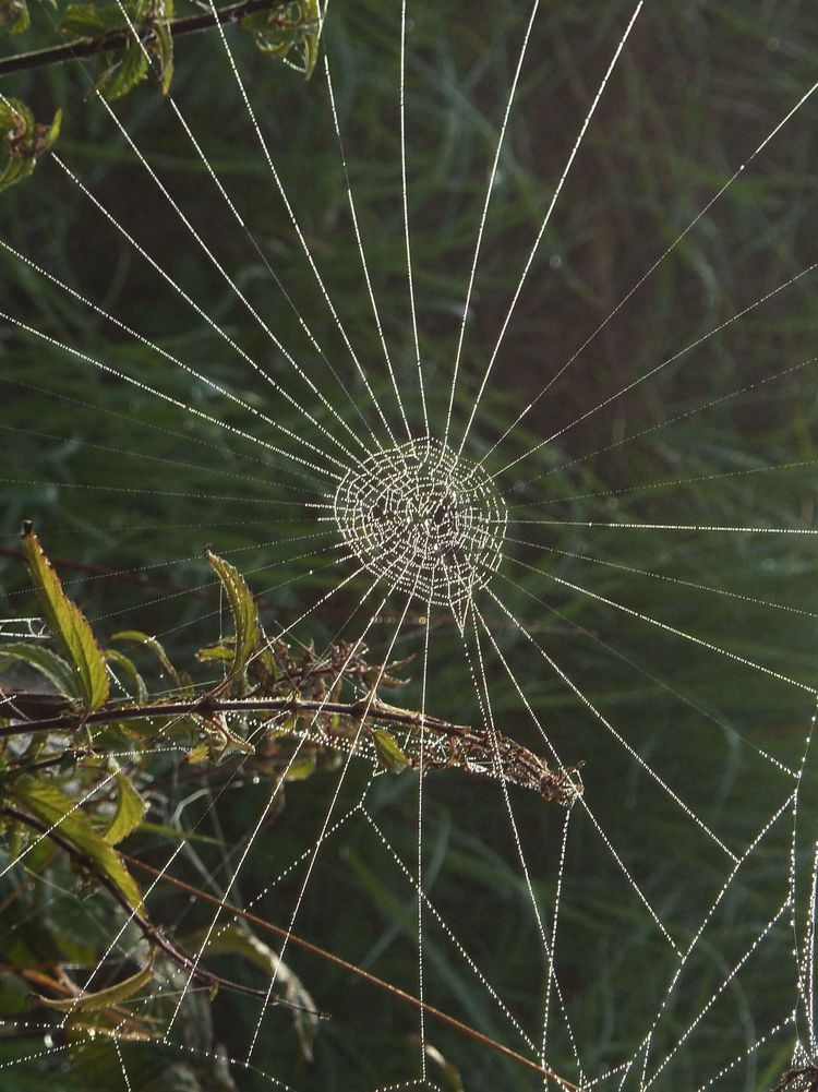 Spinnweben 21
