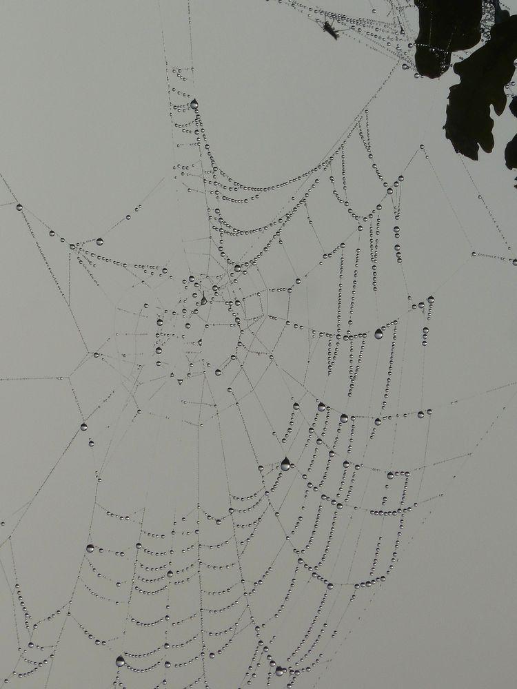 Spinnweben 9